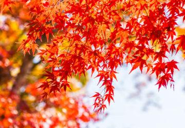 【毎週木曜・10月】マルチプルアバンダンス上級実践会のお知らせ